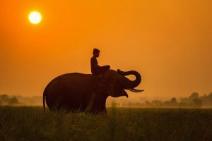 Learn English Listening: The Elephant and Blind People
